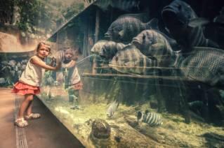 Een kind in de dierentuin leunt met beide handen tegen een aquarium aan